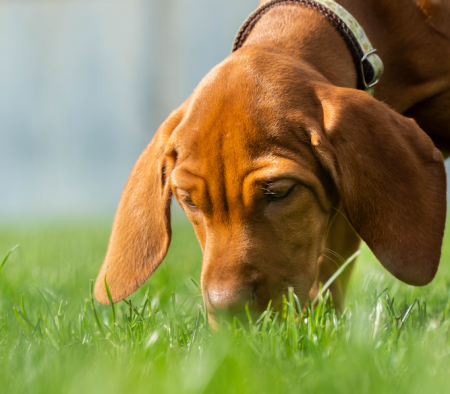 Are my dog's farts normal or a smelly sign of trouble?