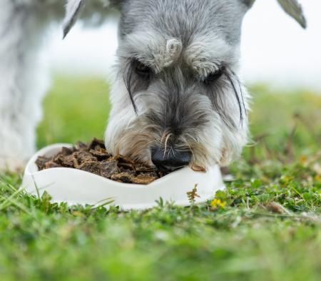 Dog food for arthritis - everything you need to know - primary image