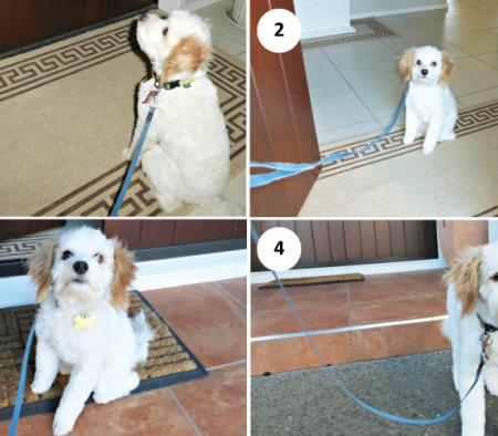 Blog post: Sitting to put on leash - primary image