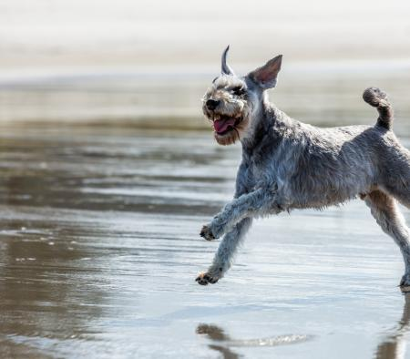 Dog food with glucosamine: why your dog needs it - primary image