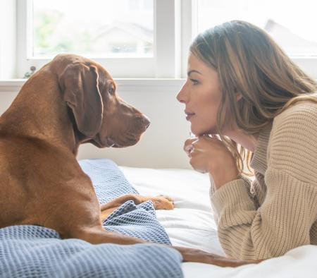 Dog with pet guardian on bed