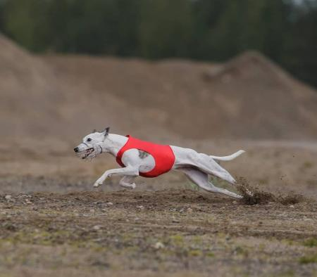 Only the best for my whippet girls