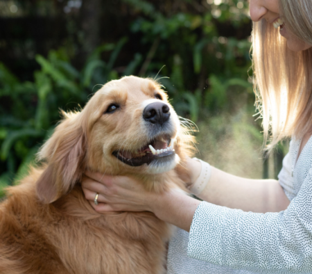 How to Clean Your Dog's Teeth – Without Brushing